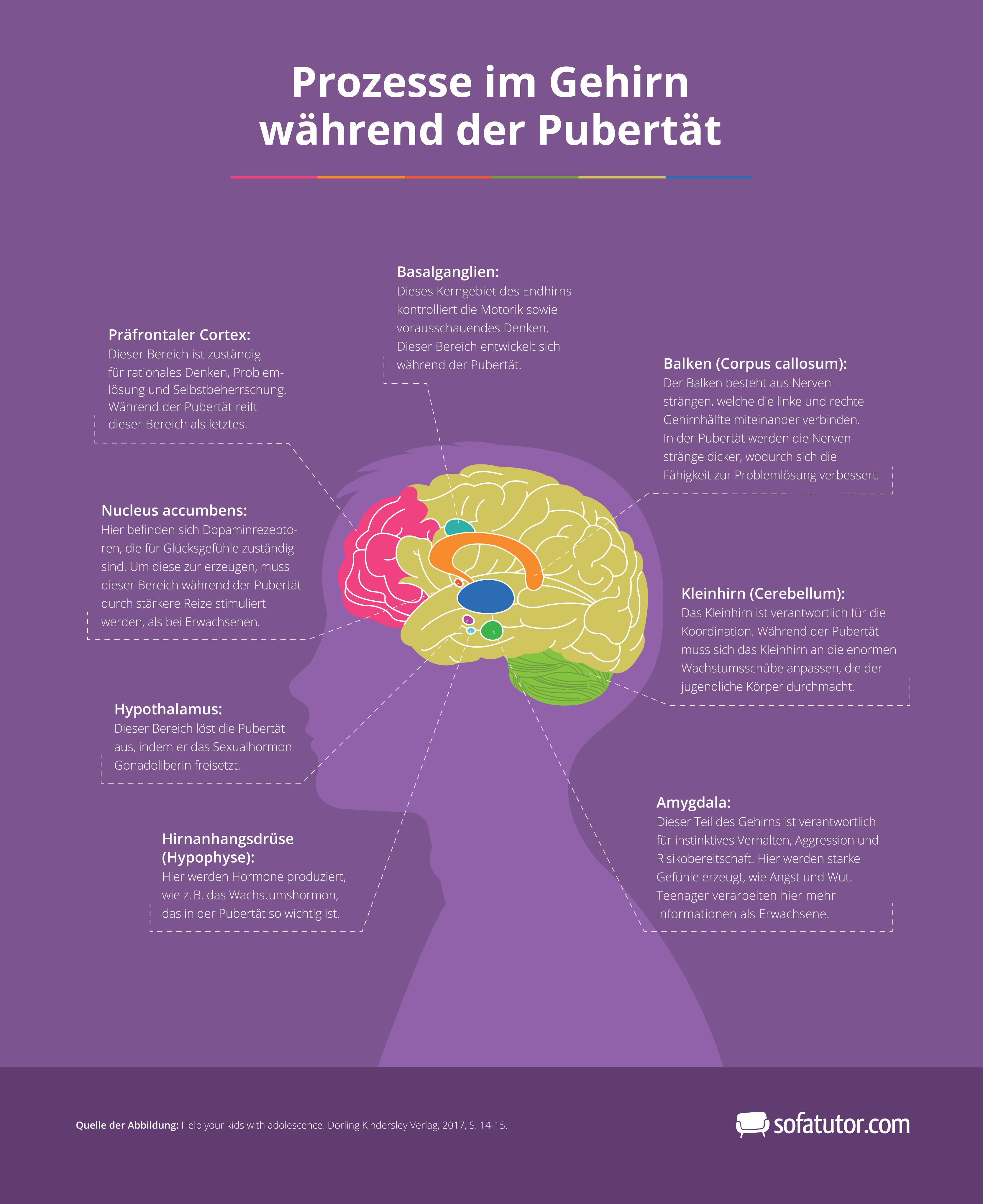 infografik_gehirn_pubertaet