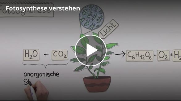Screenshot zur Fotosynthese