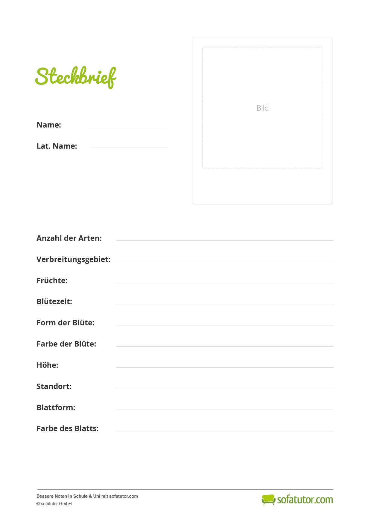 kostenloses lehrmaterial steckbriefe erstellen im unterricht