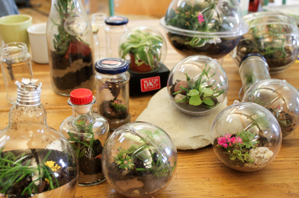 diy gl hbirnen terrarium was es ist und wie du es bastelst. Black Bedroom Furniture Sets. Home Design Ideas